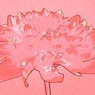 Red dahlia by Sandra O'Connor