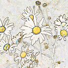 Daisies by Sandra O'Connor