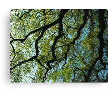 Giving Shelter Canvas Print