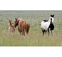 Wild Pinto Stallion, Red Desert Photographic Print