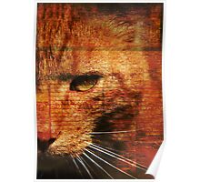 Kitty.. Poster