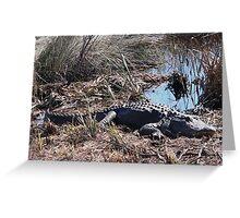 Sunning Gator Resting.... Greeting Card