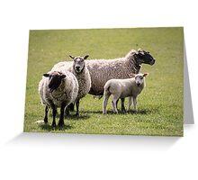 Gurning Sheep Greeting Card