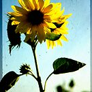 Sunflower by Kasia Fiszer