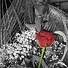 Red rose by Bru66