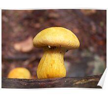 Wild Mushroom Poster