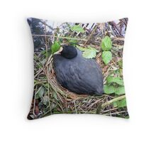 Coot on Nest Throw Pillow