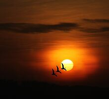 Flying home to roost by missmoneypenny