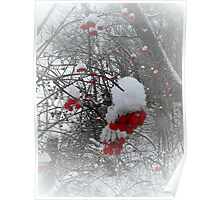 The snowflakes glisten on the tree..The sun no longer sets me free.. I feel there's no place freezing me..Let me feel the frost of dawn..Fill my dreams with flakes of snow..   Poster