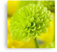 Green dahlia Canvas Print