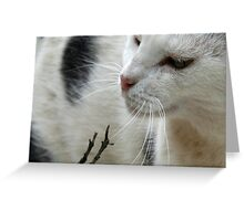 Close Up Of A Piebald Cat Greeting Card