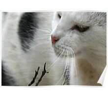 Close Up Of A Piebald Cat Poster