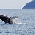 laid back... humpback breach by Bob Moore
