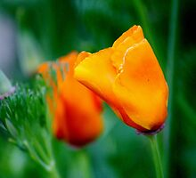 Loving The Color Orange by Cynthia48