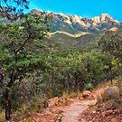 Madera Canyon Trail by Barbara Manis