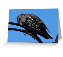 A Starling Greeting Card
