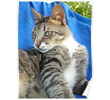Tabby Cat Against Blue Cloth Background Poster