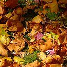 Autumn surprise by Themis