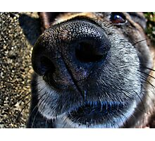 Nosey Photographic Print