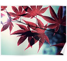 maple, japanese Poster