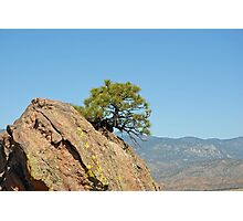Shrub and Rock at Canon City  Photographic Print