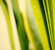 leaf lines by sabrina card