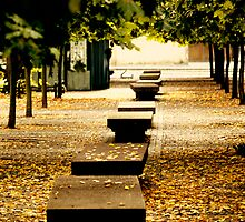 benches, leaves and trees by sabrina card