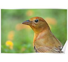 Female Summer Tanager Poster
