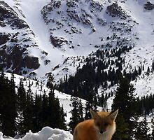 Pikes Peak Fox by Scott Chambless