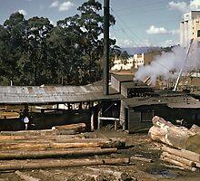 1952 Timber Mill & Sanitarium factory Warburton by Fred Mitchell