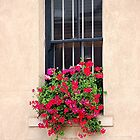 Geranium Window Box by patapping