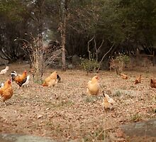 The chicken yard by sanctuaryfaces