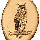 Long-Eared Owl by Heather Ward