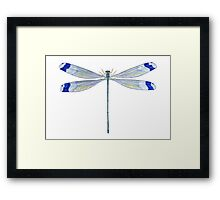 Helicopter Damselfly Framed Print