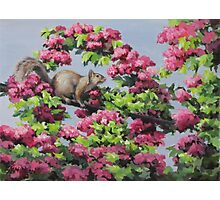 Squirrel in the Blossoms Photographic Print