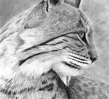 Bobcat by Heather Ward