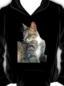 Tabby Cat Isolated Background T-Shirt