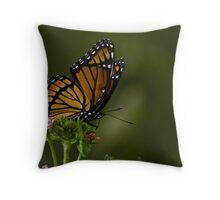 Vice Roy Butterfly Throw Pillow