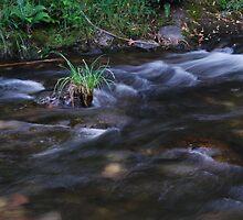 Jamieson River, N.E. Victoria, Australia by MissyD