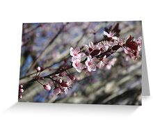 why wait till spring? Greeting Card