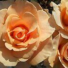 Tangerine Ruffles by Jess Mo