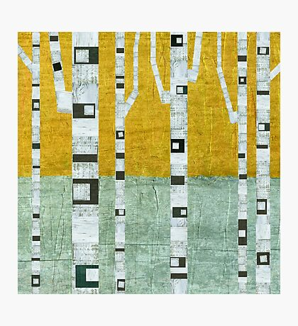 Early Winter Birches Photographic Print