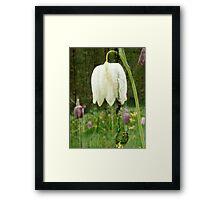 Fritillaria flower on wood Framed Print