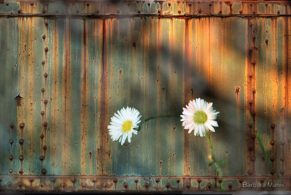 Rustic by Barbara Manis