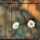 Rustic by Barbara Manis