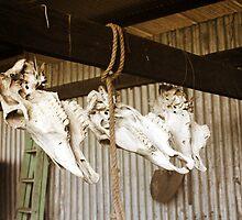 Skulls - Hanging Around by Helen Martikainen