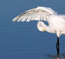Great Egret by kathy s gillentine