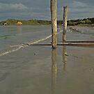 Two Stumps, Mornington Peninsula by SusanAdey