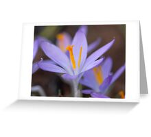 Blurry Beauty Greeting Card