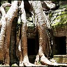 Ta Prohm by Kristi Bryant